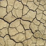 Clay soil showing a network of cracks caused by drying.