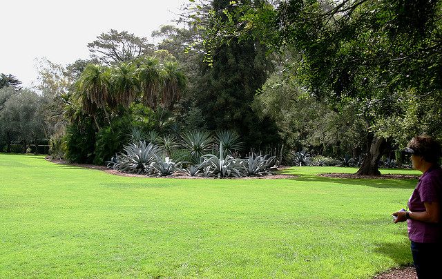 Main lawn at Lotusland. Photo by J. Books.